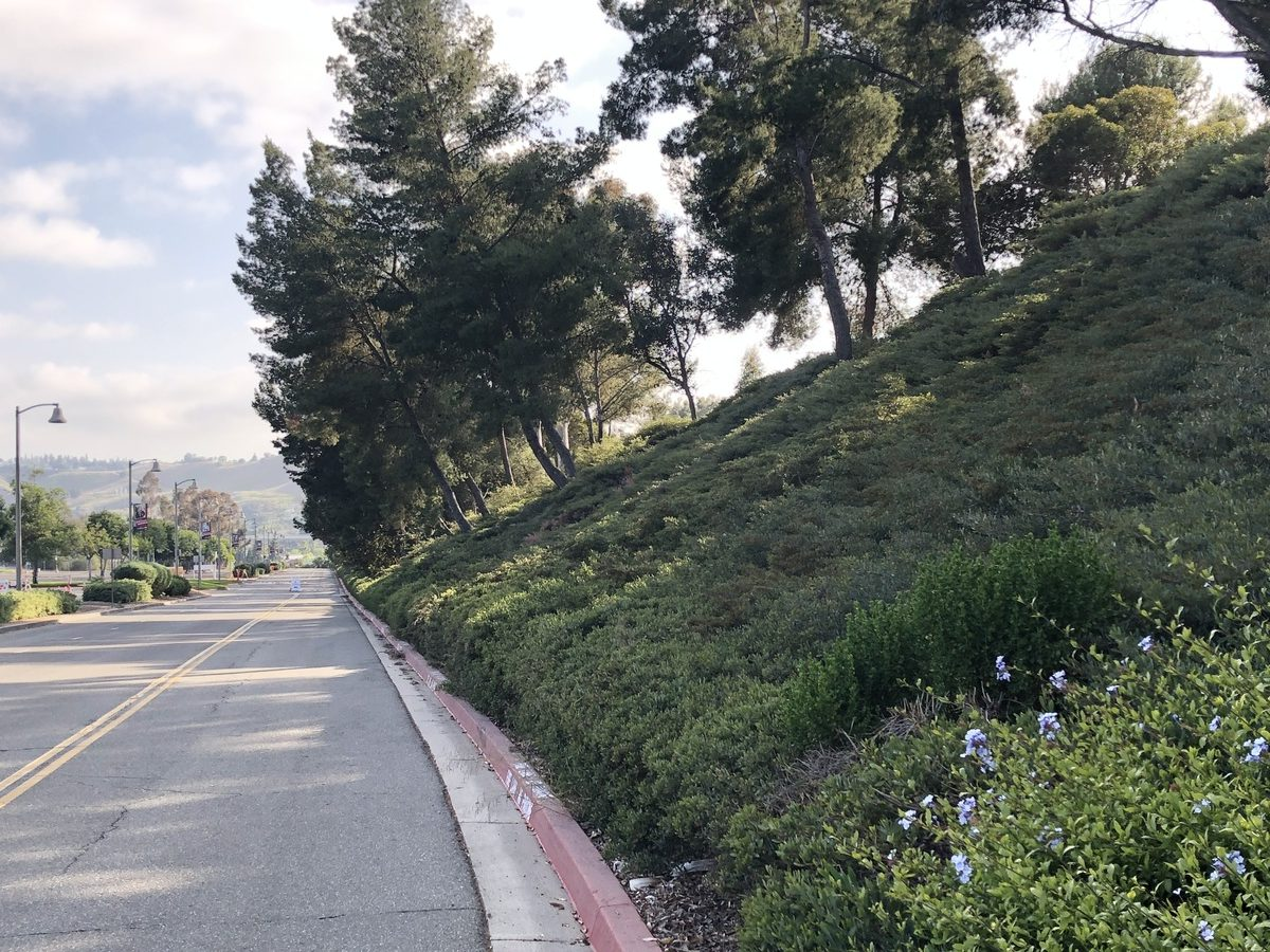 Saddleback College campus to undergo environmental improvements and landscape beautification